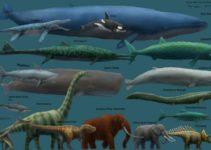 manusia kecil sekali bila dibandingkan dengan dunia hewan hewan ini